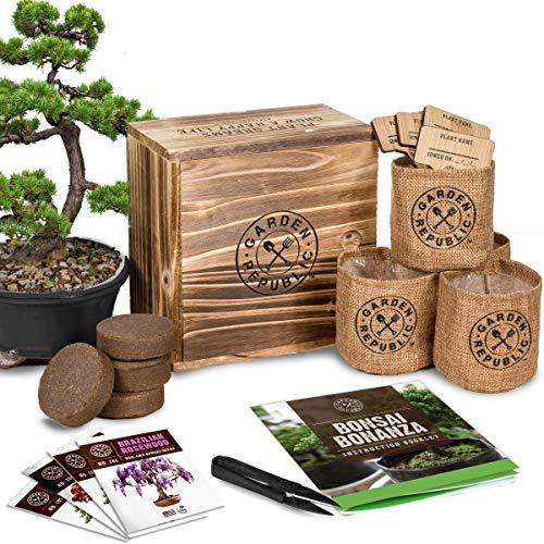 Bonsai Tree Seed Starter Kit - Mini Bonsai Plant Growing Kit, 4...