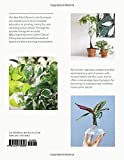 Zoom IMG-1 the new plant parent develop