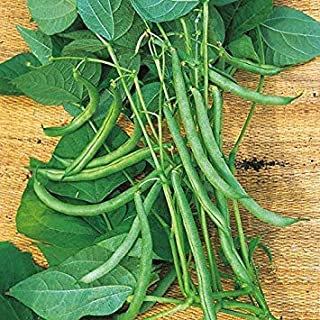 Kings Seeds - Beans - Climbing French Beans Blue Lake - 125 Seeds