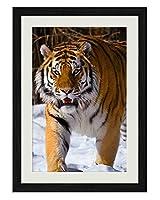 アムールトラ雪の冬 動物の写真木製黒額縁アートポスター(40cmx60cm)