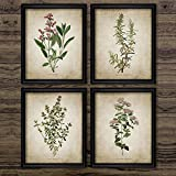 HUANGXLL Vintage Herb Art Canvas Poster and Prints, Oregano Rosemary Sage Thyme Canvas Painting Retro Wall Pictures Home Art Wall Decor-40x60cmx4 No Frame