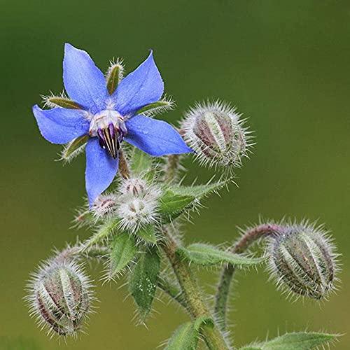 Garten Geschenk,Flower Seed Flower Grass...