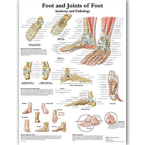 SDFSD Fußfugen der Fußkarte Anatomie Pathologie Poster Leinwand Malerei Wandbilder für die medizinische Ausbildung Arztpraxis Klassenzimmer 60 * 100cm