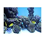 PVC Coral Acuario Fondo Submarino Poster Fish Tank Decoraciones para Pared Sticker Submarino Reef Pattern (61 x 30 cm)