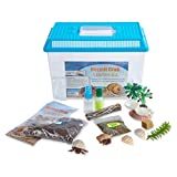 Nature Gift Store Live Pet Hermit Crab Complete...