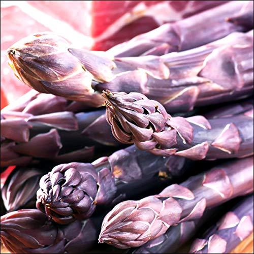 北海道産 極太 アスパラ 紫アスパラ 1.2kg (L-2Lサイズ) アスパラガス