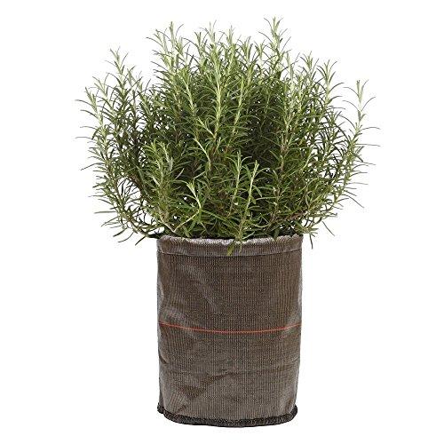 Pot à Planter Marron 70 litres