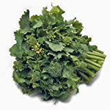 Broccoli Raab Seeds, Rapini, Heirloom, Non GMO, 100 Seeds, Delicious a Culinary Delight