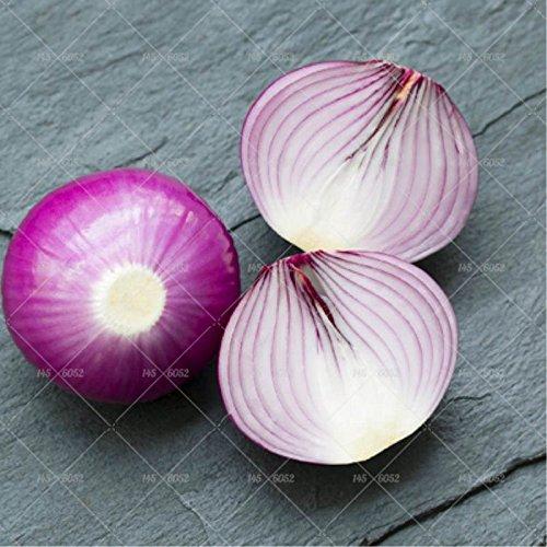 100 pcs/sac graines fraîches géant oignon rouge et violet Graines de légumes 95% d'origine végétale à haute germination pour le jardin à domicile Livraison gratuite 4