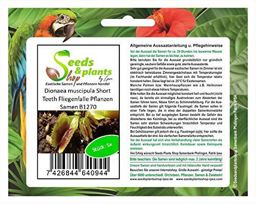 Stk - 5x Dionaea muscipula Short Teeth Fliegenfalle Pflanzen - Samen B1270 - Seeds Plants Shop Samenbank Pfullingen Patrik Ipsa