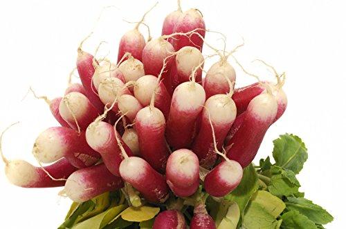 150 graines Bio - RADIS Long de 18 jours - Certifié AB - Raphanus sativus