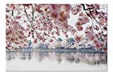 Washington, DC - Cherry Blossoms over Tidal Basin - Photography A-93369 93369 (Premium 500 Piece Jigsaw Puzzle for Adults, 13x19, Made in USA!)