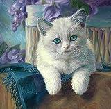shuodade Colore Fai da Te con Numeri per Adulti con Gli Occhi Blu Gatto Bianco GILA GILA per Bambini Adulto Principiante Disegno con spazzole Decorazione Natalizia
