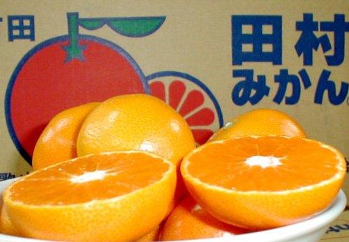 和歌山産 紀州有田 田村みかん 5kg Mサイズ 47個前後入り 市販箱にてお送りします