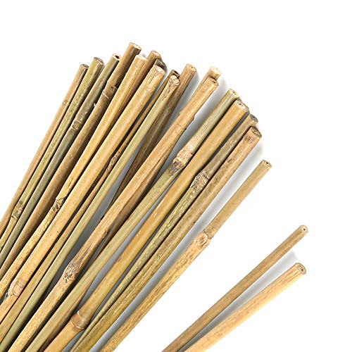 Pllieay Pali di bambù Spessi Naturali Paletti da Giardino Canne di bambù per Supporto Piante, 40 cm