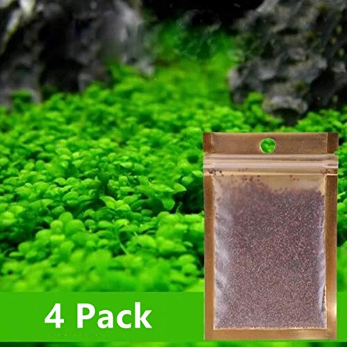 Water Plant Seeds Easy to Grow Double Leaf Grass -0.35oz/Pack Grow Plants for Fish Tank Decoration Landscape Ornament Aquarium Grass Plants Seeds 4 Pack (Large Double Leaf)