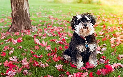 Pintura de diamante 5D Taladro completo Schnauzer lindo perro animal animal decoración del hogar bordado carácter mosaico fabricación