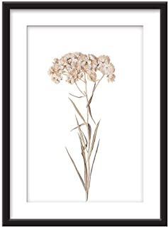wall26 - Framed Wall Art - Dried Plant Specimen White Flower - Giclee Printed Art in Black Picture Frames White Matting - 23x31 inches