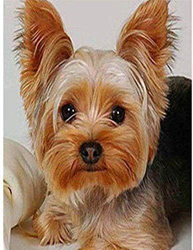 A-Generic DIY 5D Adorable Perro Animal Taladro Completo Cuadrado Diamante Resina Pintura Kit Dibujo de Diamantes de imitación para decoración de habitación-ZQF1087