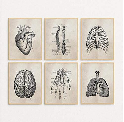 JEfunv Human Anatomy Science Vintage Posters Láminas artísticas/Anatomía Médica Lienzo Pintura Médico Médico Clínica Imágenes de Pared Decoración-30x40cmx6 sinMarco