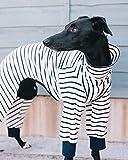 Pijama de rayas blancas y marinas, látigo, galgo italiano, galgo, acechador, avistamiento, galgo, ropa de Saluki (XXSMALL)
