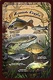 Fisch Angeln Karpfen Blechschild Gewölbt Neu 20x30cm S4909
