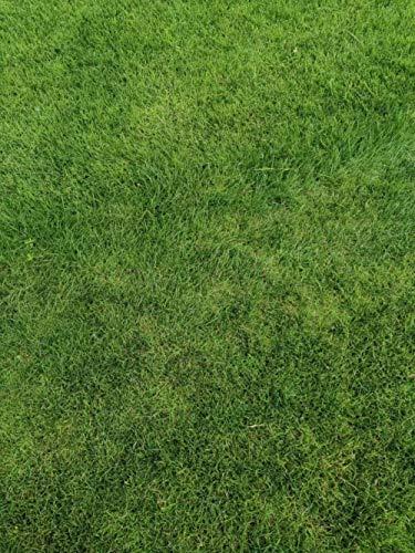 Rasensamen Alle Jahreszeiten Immergrün Kostenlos Beschneiden Manila Ryegrass Garden Sod Grassamen 300-Cut Bentgrass 300 Körner_Vielfalt nach dem Bild