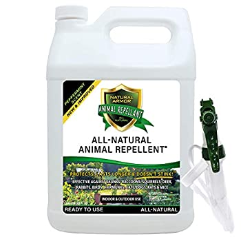 Natural Armor Animal & Rodent Repellent Spray Repels Skunks Raccoons Rats Mice Deer Rodents & Critters Repeller & Deterrent in Powerful Peppermint Formula – 128 FL OZ Gallon Ready to Use