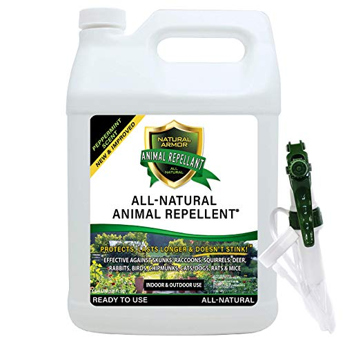 Natural Armor Animal & Rodent Repellent Spray. Repels Skunks, Raccoons, Rats, Mice, Deer Rodents & Critters. Repeller & Deterrent in Powerful Peppermint Formula – 128 FL. OZ. Gallon Ready to Use