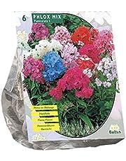 Phlox Mix bloembollen per 6