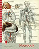 Notebook: Blood Vessels 19th Century Medical Biology Human Body Intestines