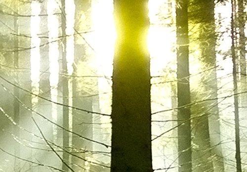 SENSATIONSPREIS ! Bilder 200×100 cm – Wasserfester Leinwanddruck ! XXL Format – Fertig Aufgespannt TOP Vlies Leinwand Wandbild 5 Teilig Landschaft Wald 030213-32 200×100 cm B&D XXL - 4
