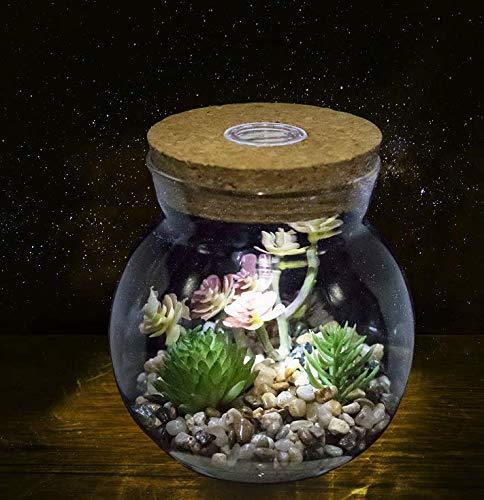 Small jar glass terrarium with light
