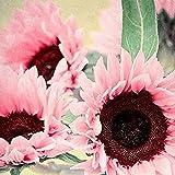 ypypiaol 15Pcs Semillas De Girasol Rosadas Bonsai Plant Office Home Outdoor Garden Yard Decoración Floral Semillas de girasol Rosado