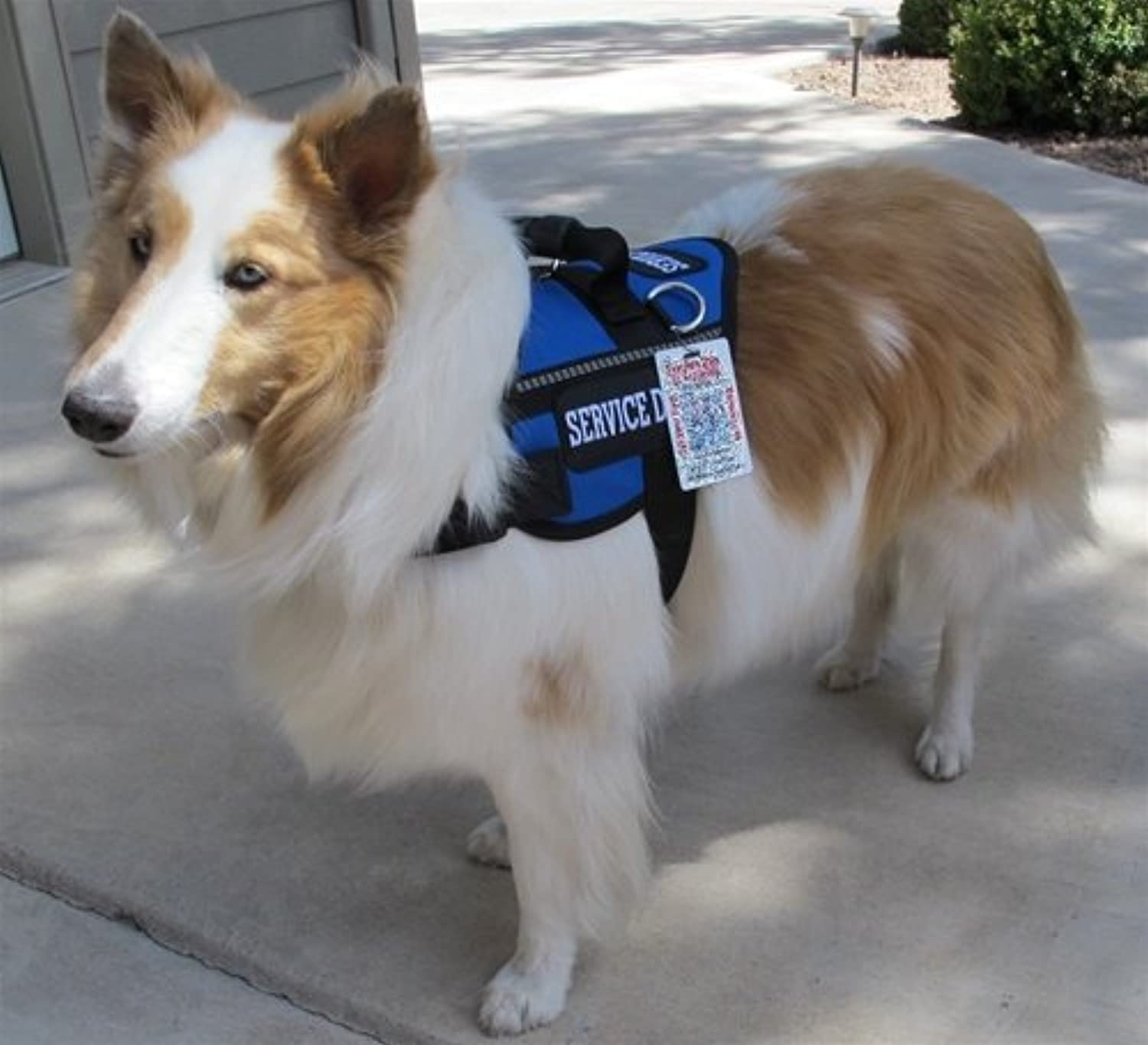 Classic Service Dog Harness Vest with FREE Emotional Support Animal patches sewn on