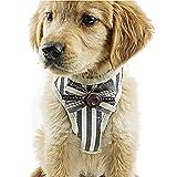 Goenn ペット チェストストラップセット紳士 ストライプ 可愛い 花 小さな蝶ネクタイ 胸部ストラップ 安全 調節可能 牽引ロープ ソフト 猫犬ハーネス 軽量 メッシュ 通気 簡単脱着式 リーシュ 小型、中、大犬用のペット用ハーネス (色 : 赤、ネイビー, サイ ズさいず:S,M,L,XL) (M, ネイビー)