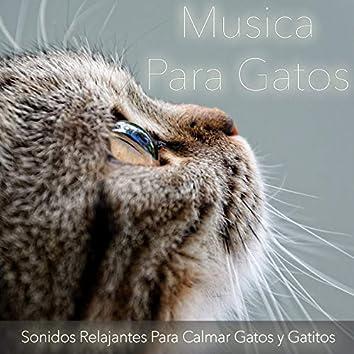 Musica para Gatos: Sonidos Relajantes para Calmar Gatos y Gatitos