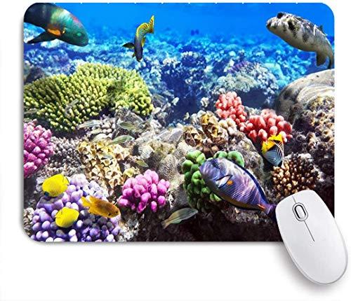 MUYIXUAN Mauspad - Lot Hurghada Riff Korallenfisch Rot Ägypten Tiere Tierwelt Natur Ozean Leben Aquarium Hawaii Unter Wasser - Gaming und Office rutschfeste Gummibasis Mauspads,240×200×3mm