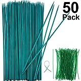Boao Stecche in Legno Verde Palo della Pianta Supporta bambù di Legno Mestiere Naturale d...
