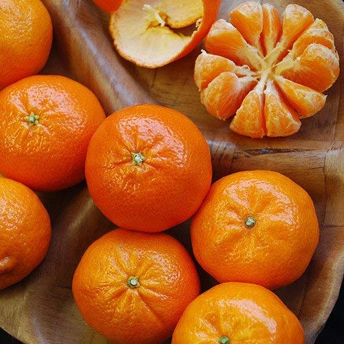 RETS Seeds: - Orange Satsuma (Mandarin/Tangerine) Seeds