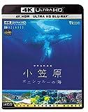 ビコム 4K Relaxes 世界自然遺産 小笠原 〜ボニンブルーの海〜[VUB-5704][Ultra HD Blu-ray]
