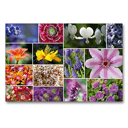 Premium Textil-Leinwand 90 x 60 cm Quer-Format Staudenblumen Collage | Wandbild, HD-Bild auf Keilrahmen, Fertigbild auf hochwertigem Vlies, Leinwanddruck von Martina Cross