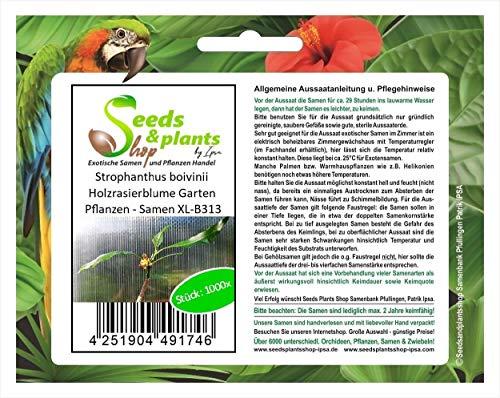 Stk - 1000x Strophanthus boivinii Holzrasierblume Garten Pflanzen - Samen XL-B313 - Seeds Plants Shop Samenbank Pfullingen Patrik Ipsa