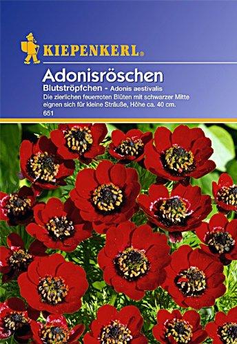 Sperli Blumensamen Adonisröschen Blutströpfchen, grün