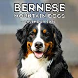 Bernese Mountain Dogs: 2021 Wall Calendar, Cute Gift Idea For Bernese Lovers Or Owners Men And Women