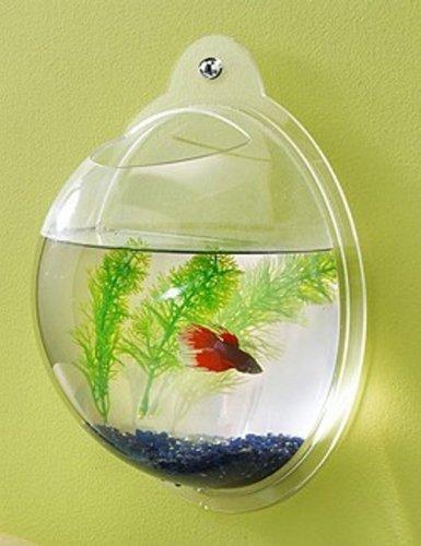 Fish Bubbles - Wall Mounted Acrylic Fish Bowl