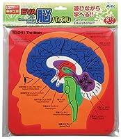 アーテック EVA 人体解剖パズル 脳 95038