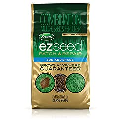 best top rated grass seed 2021 in usa