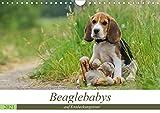 Beaglebabys auf Entdeckungstour (Wandkalender 2021 DIN A4 quer)