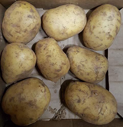 4 Stück Riesenkartoffeln XXL Griller Naturo Folienkartoffeln je ca. 350-450 Gramm